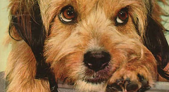 Veteran canine character actor Higgins stars as Benji