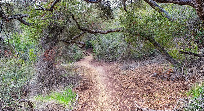 Del Mar Mesa Preserve—trees shade the trail