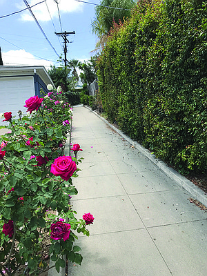 Roses add color to this walkway
