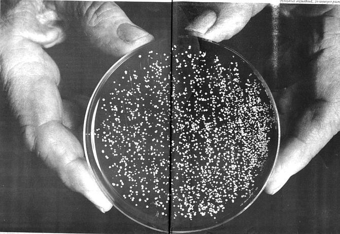 Cancer-causing progenitor cryptocides