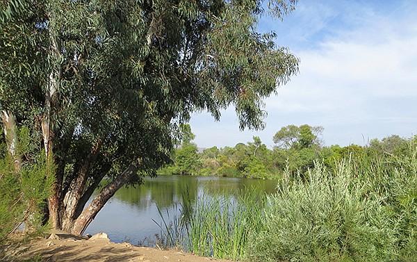 Morrison Pond | San Diego Reader