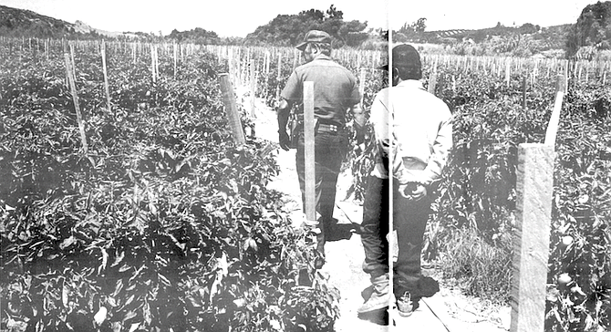 """Farmworker in custody. """"Those guys there are pure Oaxacans. The reason the [farm] foremen like 'em is that, Jesus, they're hard workers."""" - Image by Pablo Mason"""