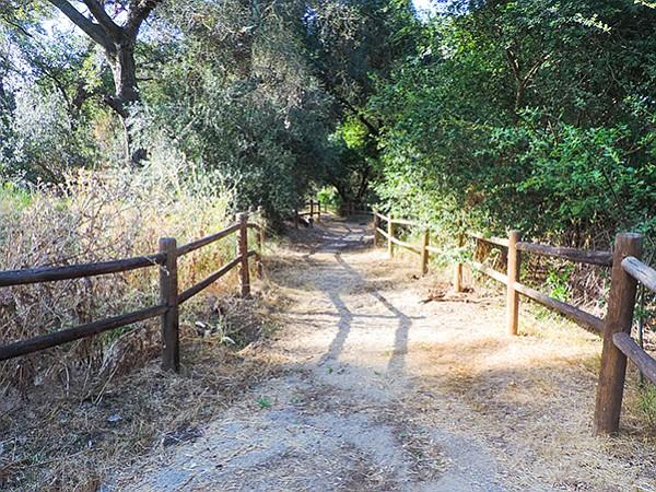 Oaks shade the Luelf Pond Trail