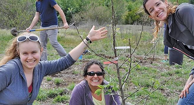 Holistic Orchard Care
