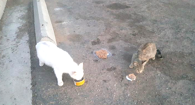 "Cats on Plaza Blvd. ""They like chicken adobo."""