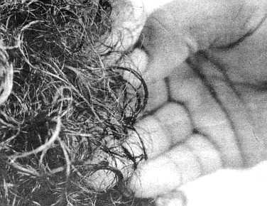 The loose, individually coiled curls resemble the stuff of a freshly wetted permanent on the head of a Caucasian.