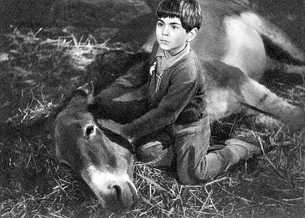 Peppino (Vittorio Manunta) with his beloved donkey, Violetta, in Never Take No For An Answer, the film that helped to decide Ben Kingsley's future.