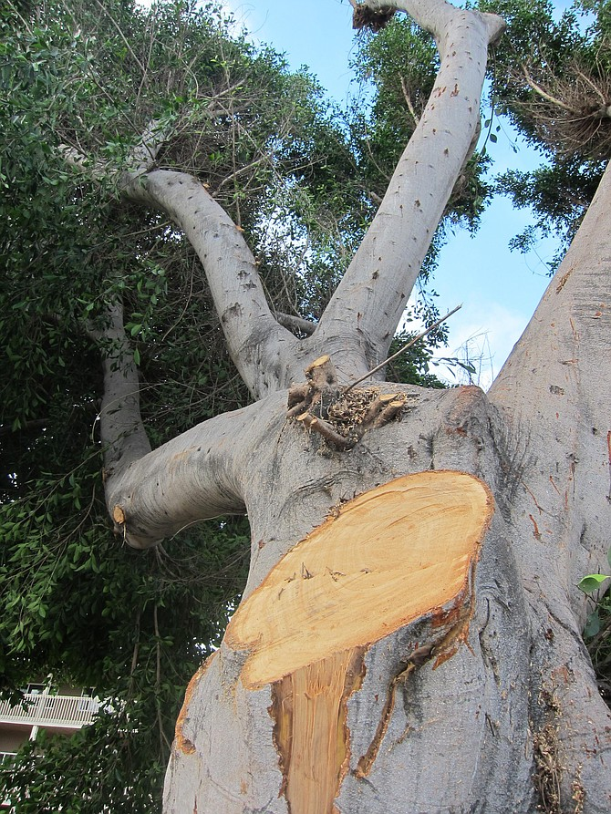 A tree survives in Bay Park.