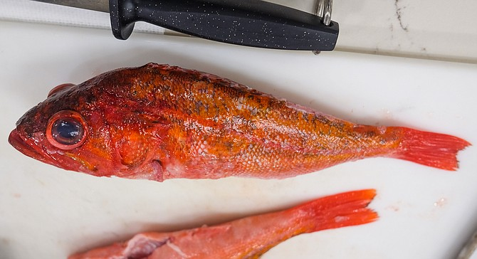 A rockfish caught by local fishermen