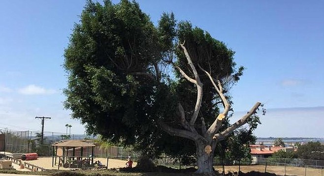 The city says the tree will survive. The church is surprised at the city's assessment.