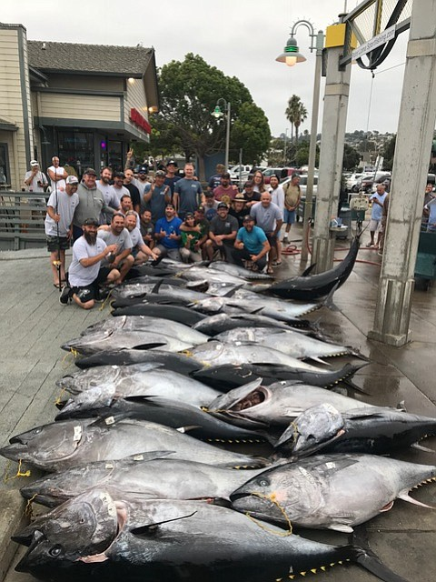 Cow bluefin tuna caught aboard the Vagabond