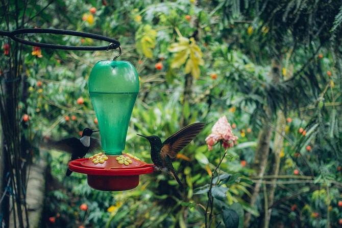 Hummingbirds at the Colibri Casa