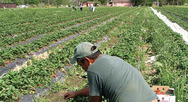 """The farmworker population has pretty much aged out."""