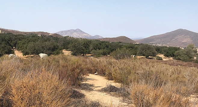 A view from the trail shows the oak woodland in the pasture lands of East County