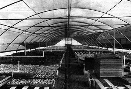 Hothouse at Effie May's farm.
