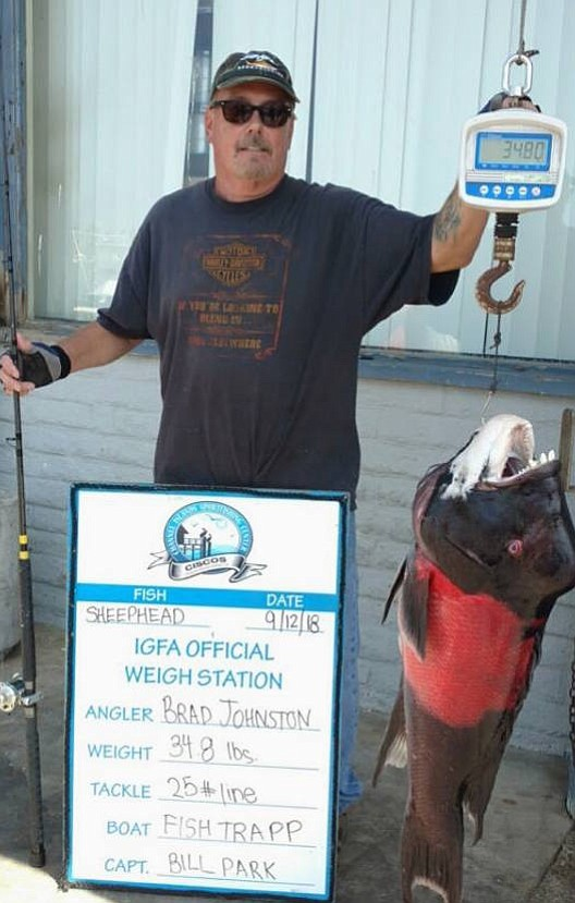 Brad Johnston with the potential all-tackle world record sheephead