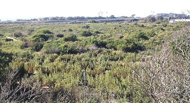 Ponto to be 344 percent more dense than the Cape Rey Hilton Resort