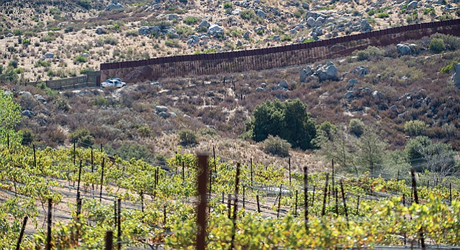 The grape vines at Campo Creek overlook the border fence.