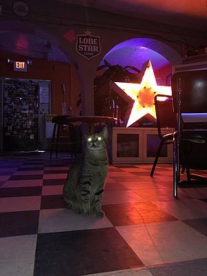 Meeting Ting Ting, Big Star Bar's resident cat.