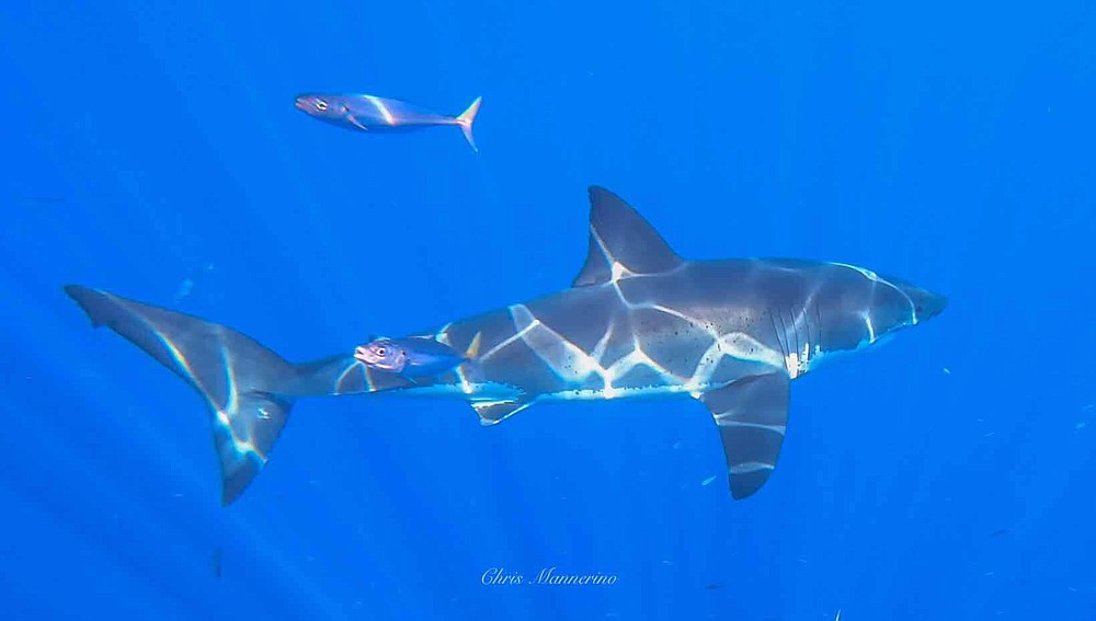 """""""We saw ten sharks on the first day, five on the second, and three on the last day."""""""