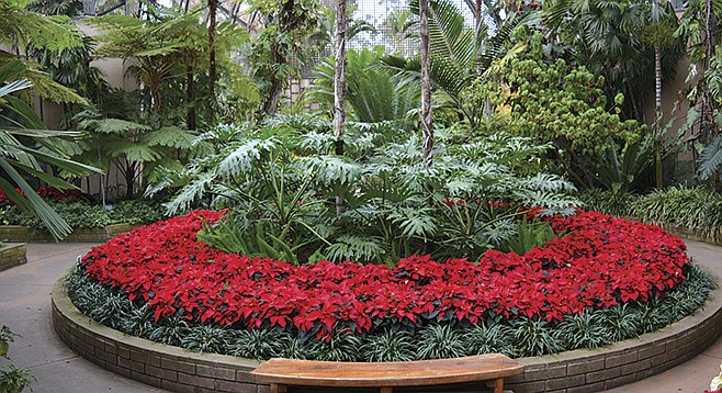 Poinsettia display at Balboa Park's Botanical Building