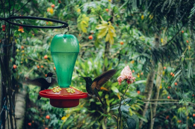 Hummingbird at the Colibri house in Acaime Nature Reserve.