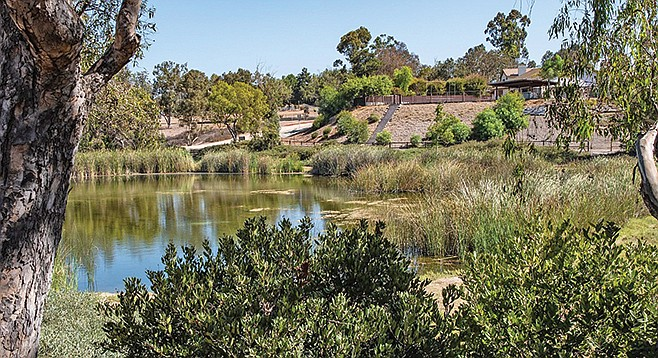 Look for birds at Poway Pond