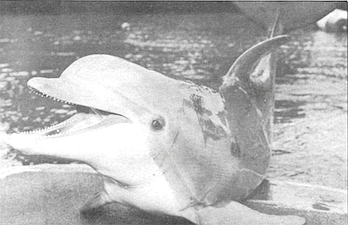 San Diego fairly hums with brightly credentialed dolphin research activity.