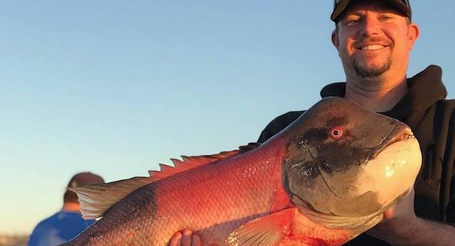 21.3 lb sheephead caught aboard the Dolphin