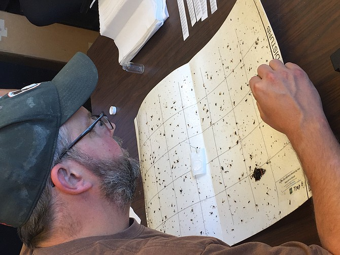 Image courtesy of San Diego Natural History Museum A trap caught shot hole borer beetles near the San Diego River