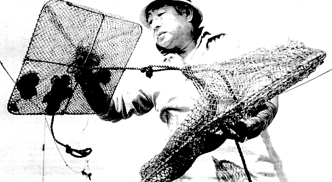 In 1979, after the yellowtail project failed,  Minoru Tanaka applied for permission to grow scallops in San Diego Bay.