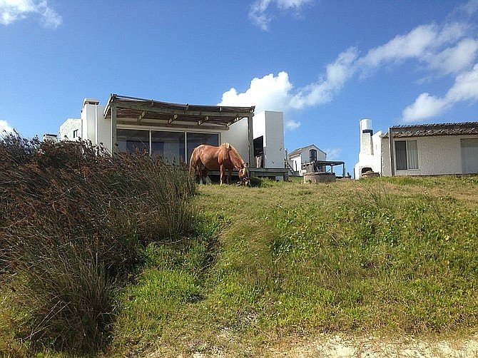 There are really no streets in Cabo Polonio, just sandy paths and passageways. Horses graze freely.