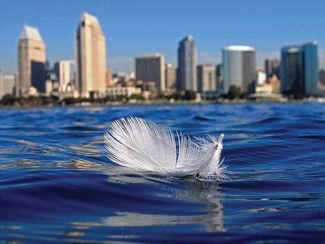 Seagull feather, November 4, 2016, San Diego Bay