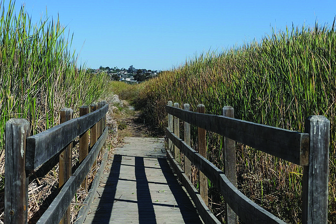 The trail cuts through the cattails and tules