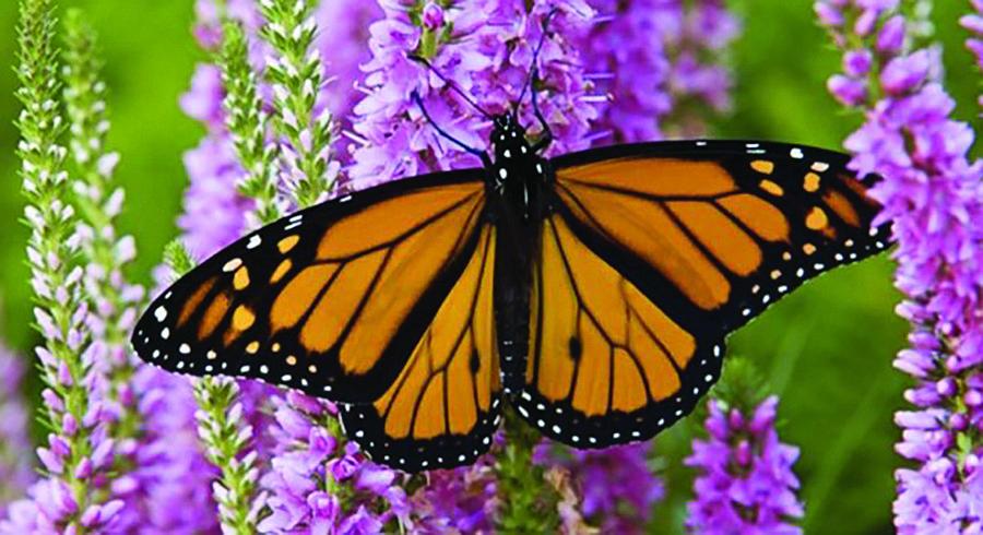 Walk among the butterflies