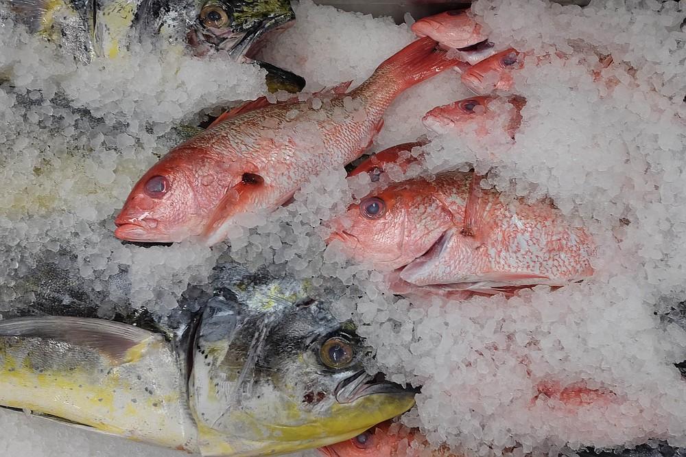 Yellowtail and rockfish on ice