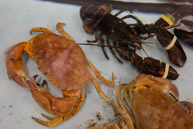 Lobster and crab in a Top Choice Fish live tank