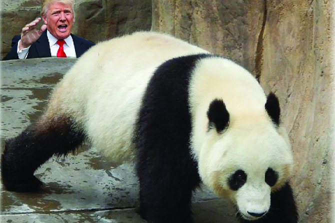 "Trump: ""No, no, Bai Yun! When I said I wanted to stop Chinese imports from displacing American goods, I wasn't talking about you! Please come back! Don't leave us with only Yogi and Boo-boo for ursine amusement and delight!"""