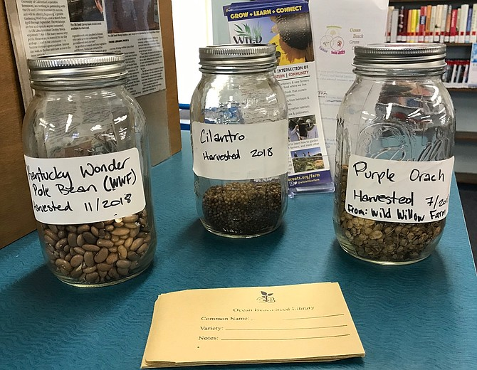 A member donated Torrey Pine seeds from a 100-year-old tree on Newport Avenue.