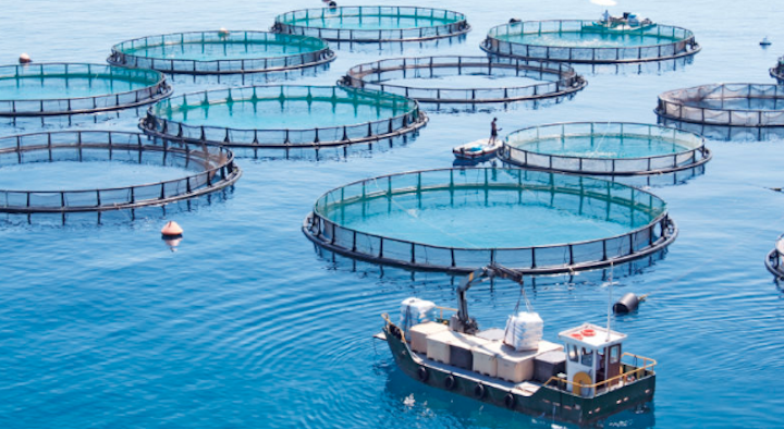 Will San Diego aquaculture bring back abalone?