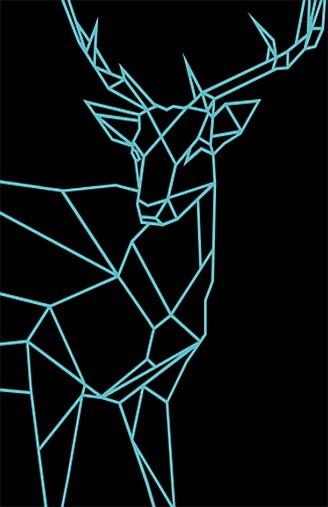 Animales Nocturnos, Nocturnal