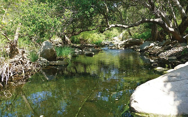 The Elfin Forest Recreational Reserve's popular Botanical Loop trail offers visitors a lush and shaded walk along the Escondido Creek.