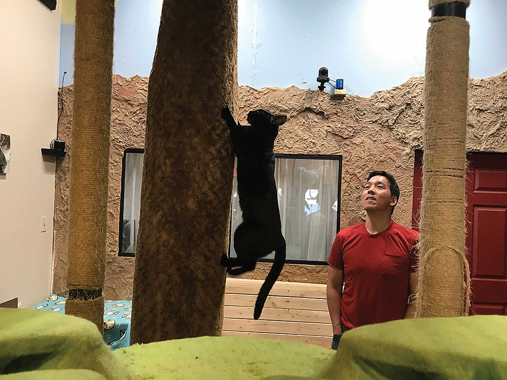 All of Cat Café's felines are adoptable and content to lounge around alongside coffee drinkers.