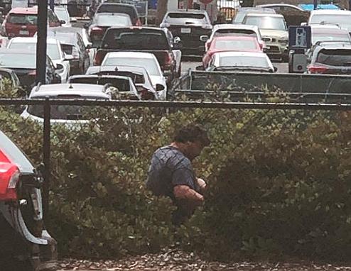 Bushes at Oceanside train station (from Take Back website)