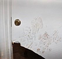Nett kicked in the flimsy apartment door.