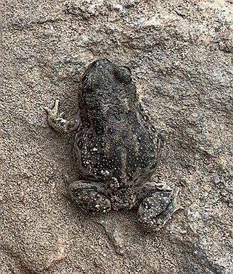 If there is water, look for red-spotted toads