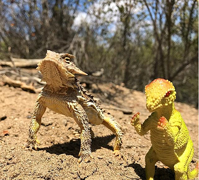 Our mascot Dino making a new friend at Hellhole Canyon County Preserve