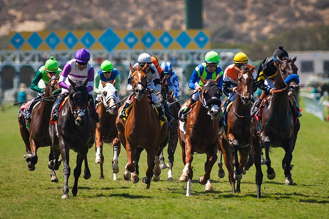The hubbub over race horse deaths has been a prominent feature of the sport of kings lately.