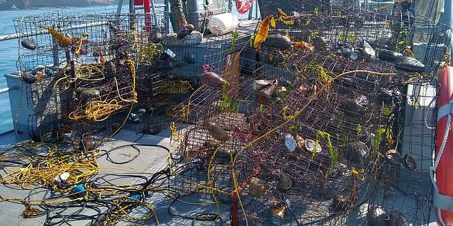 740 lobsters released in Ejido Eréndira