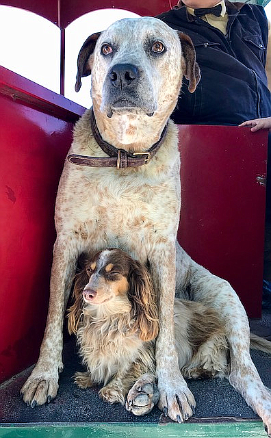 Coach dogs on the wine tour trolley.
